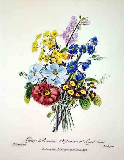Flowers and fruits / Fiori e frutta